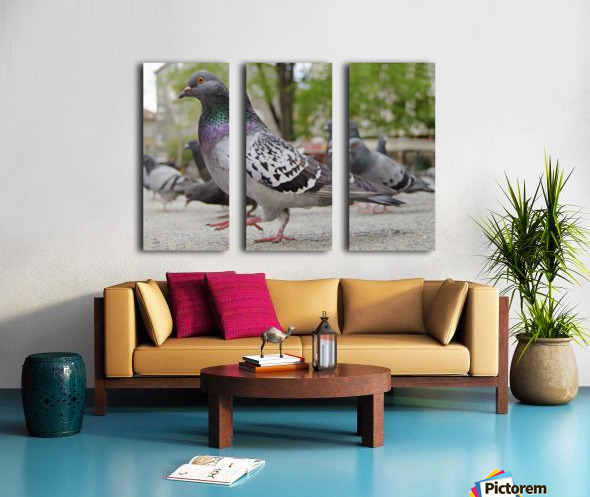 Pigeon in the park Split Canvas print