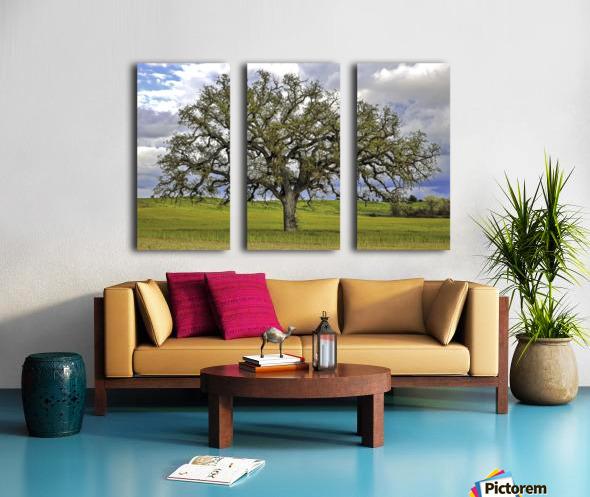 Lone Settler Split Canvas print