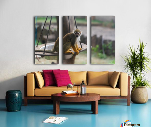 A Snack Split Canvas print