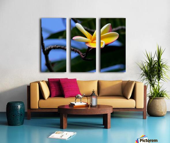 Yellow Plumeria  Split Canvas print