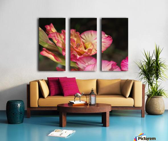 Gladiolus Display Split Canvas print