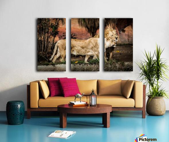 The Loving Lion Couple Split Canvas print
