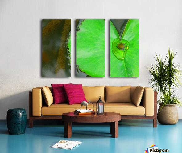 Lily Pad Split Canvas print