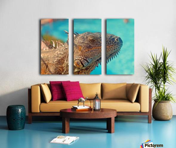 Spiny-Tailed Iguana Split Canvas print
