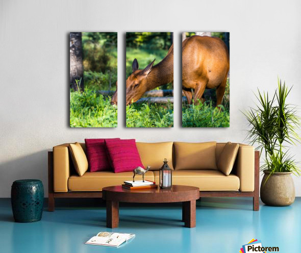 Baby Elk Split Canvas print