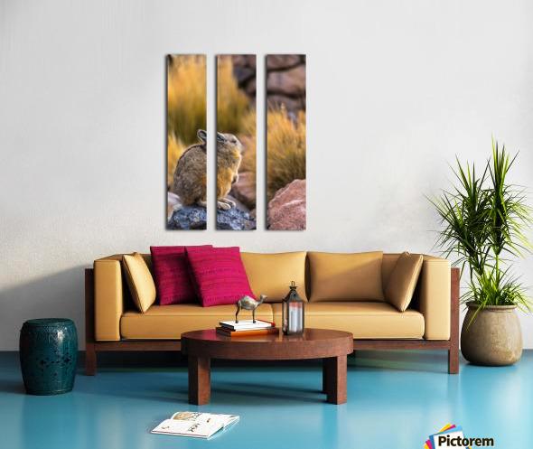 Viscacha Split Canvas print
