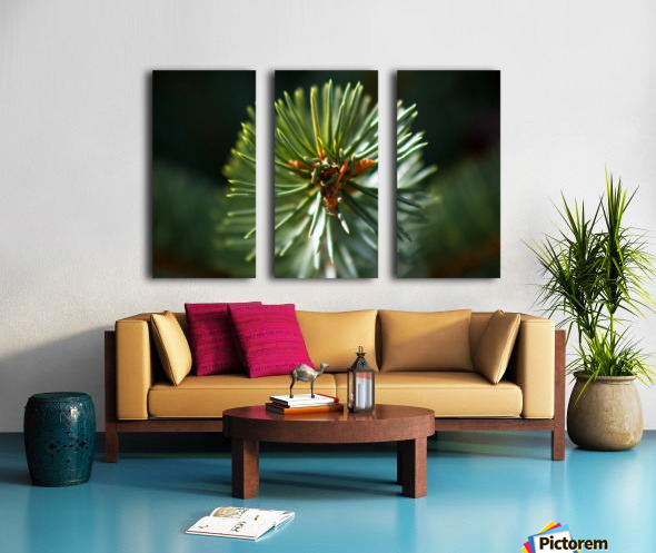 1.618 Split Canvas print