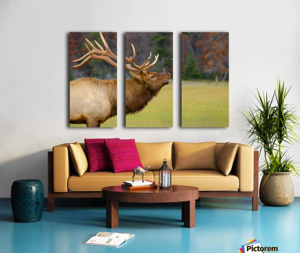 Call of the Wild Split Canvas print