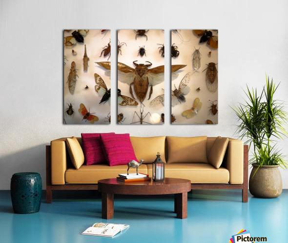 Biodiversity Split Canvas print