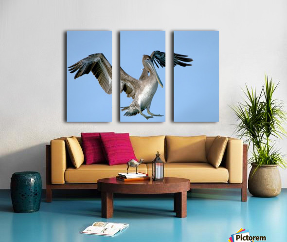 Arriving: Brown Pelican  2509 Split Canvas print