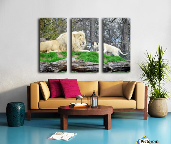 White Lion with Baby Split Canvas print