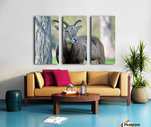 Mouflon in the Forest Portrait Split Canvas print