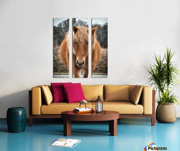 Assateague Horse Miekes NoeLani Split Canvas print