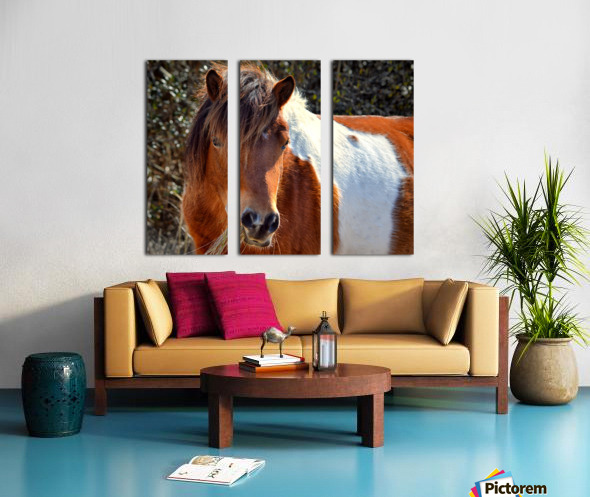 Assateague Pony Ms Macky Split Canvas print