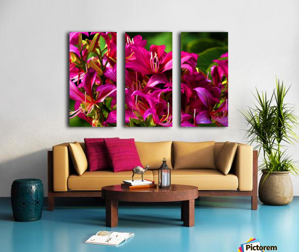 Hong Kong Orchid Split Canvas print