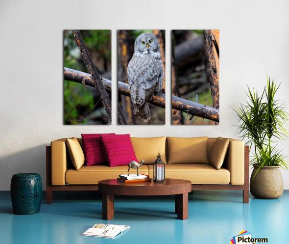 Owls Split Canvas print