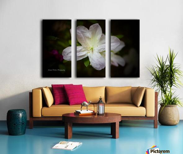 White Azalea  Split Canvas print