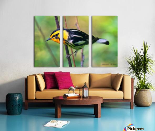 Birds Split Canvas print