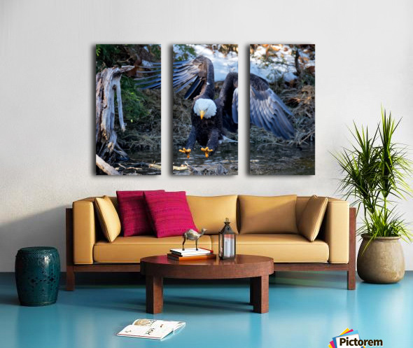 Bald Eagle Split Canvas print