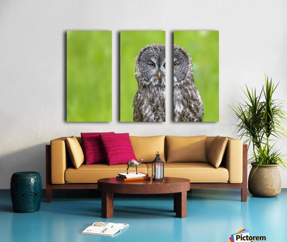 Great Grey Owl - Grey on Green Split Canvas print