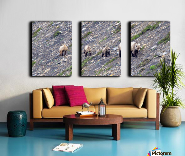 Grizzly Bear Family - Walk this way.  Kananaskis Country Alberta. Canada Split Canvas print
