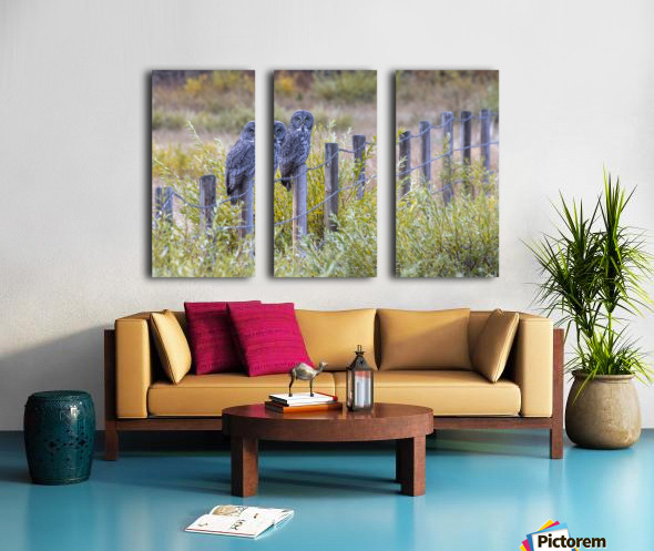 Seeing double - Great Grey Owl Split Canvas print