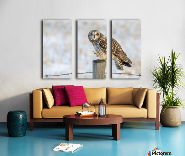 Short Eared Owl - Just an Itch Split Canvas print