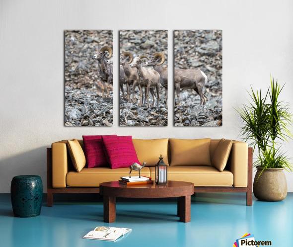 Big Horn Sheep - Family Portrait Split Canvas print