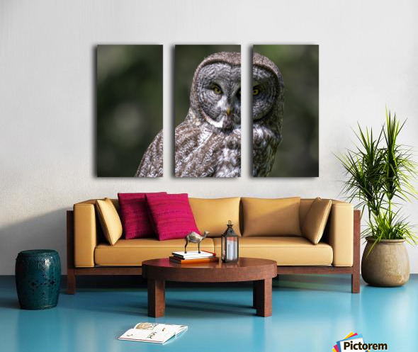 Great Grey Owl - Up close Split Canvas print