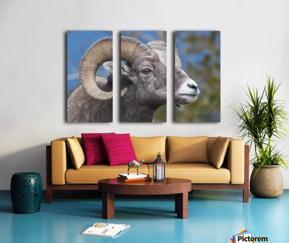 Big Horn Sheep - Portrait Split Canvas print