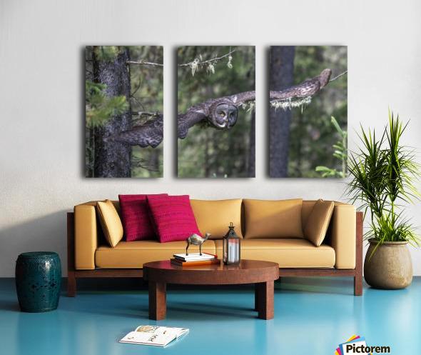 Great Grey Owl - Wing Span Split Canvas print