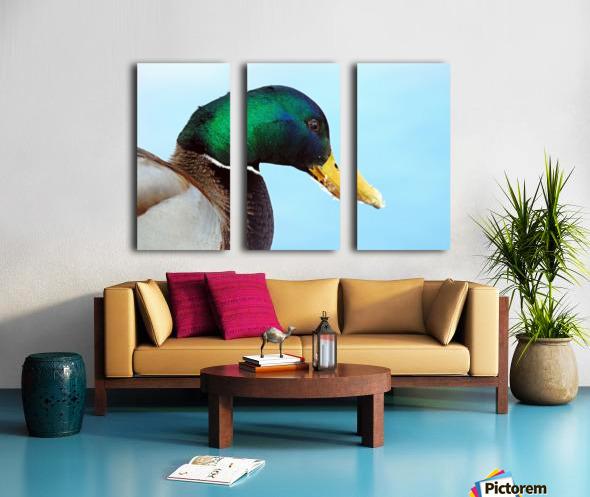 Drake Mallard Portrait II Split Canvas print