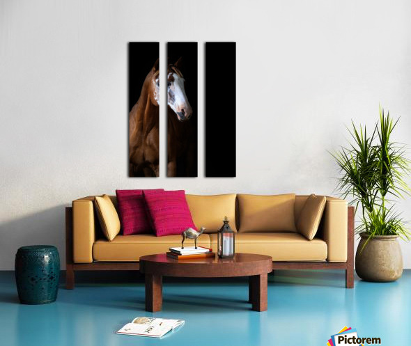 Studio Horses Split Canvas print