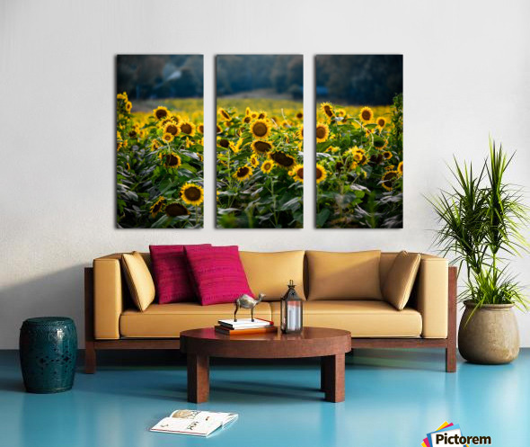 Sunflower Field Split Canvas print