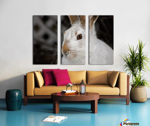 Mr Rabbit Split Canvas print