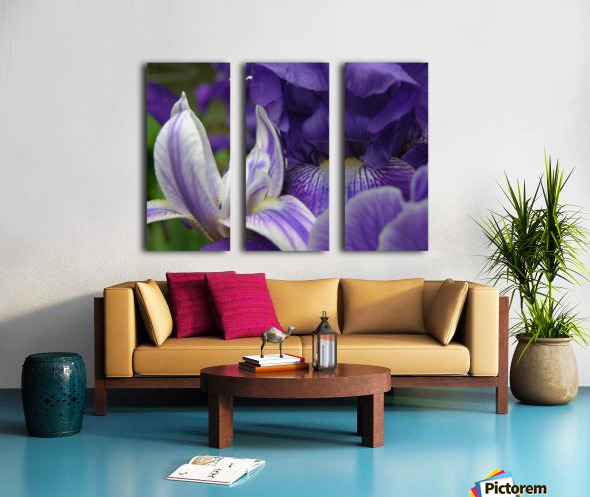 Floral Iris Photograph  Split Canvas print