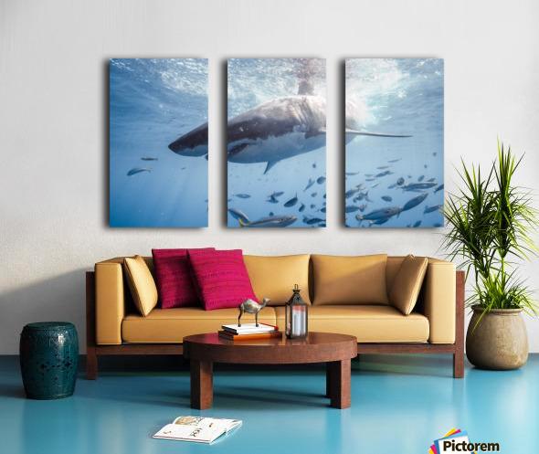 Great White Dive Split Canvas print