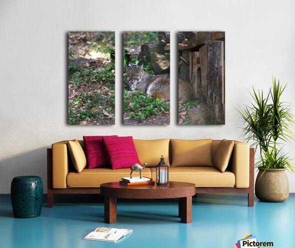 Bobcat Split Canvas print