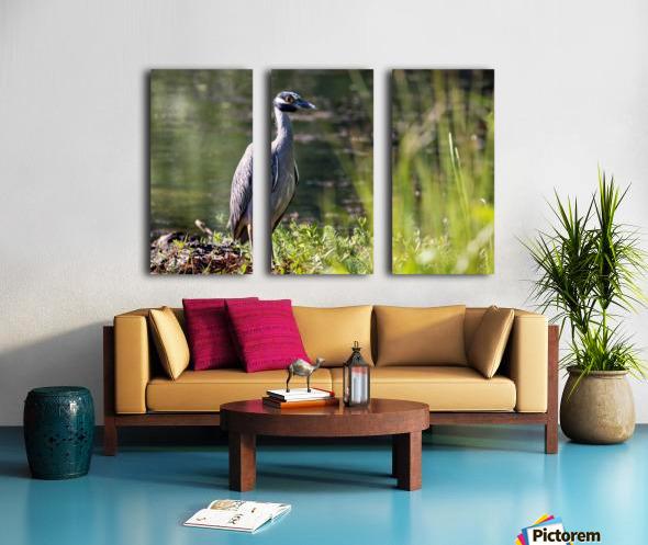 Yellow crowned Night Heron at Brick Pond Park 4690 Split Canvas print