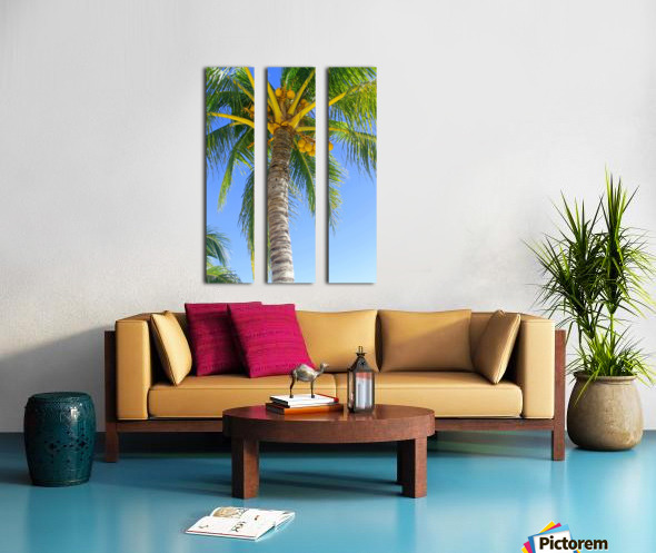 Palm Tree and Coconuts Split Canvas print