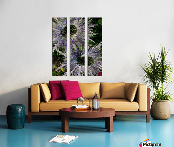 Sea Holly Split Canvas print