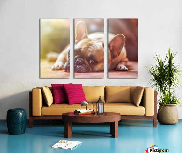 Sweet bully Split Canvas print
