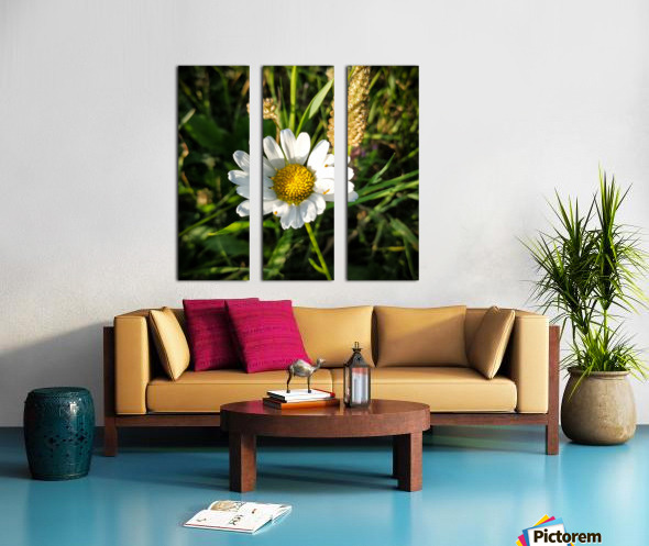 Little daisy in grass Split Canvas print