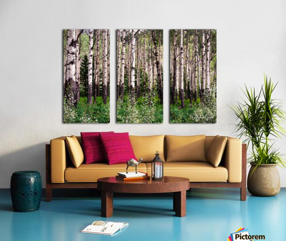 Aspens In Banff National Park at Muleshoe Split Canvas print