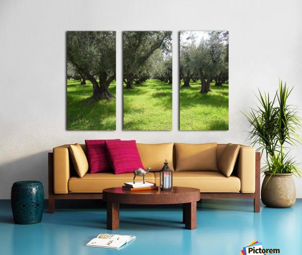 Olive Orchard In Spring Split Canvas print