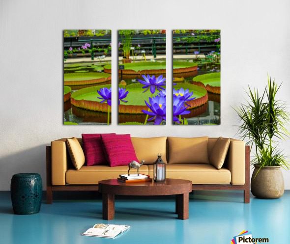 Purple water lily in a pond Split Canvas print