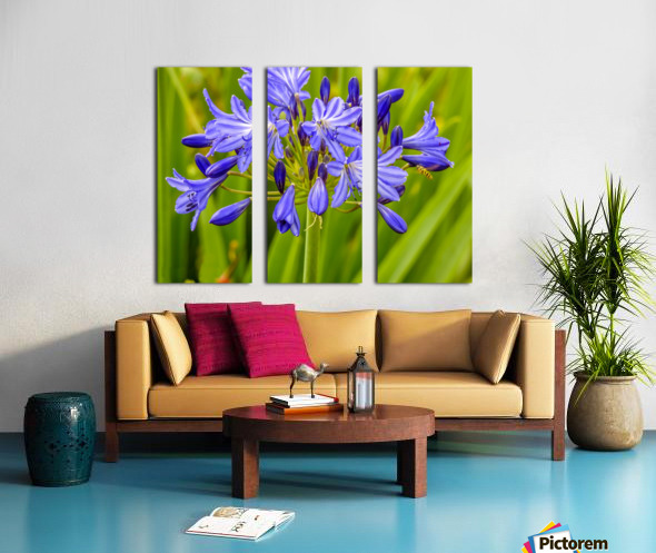 Close up of purple flowers Split Canvas print
