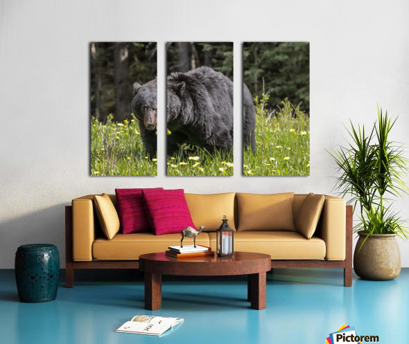 Black Bear With Dandelion Split Canvas print