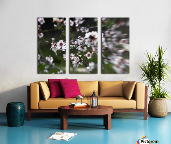 Flowering almonds 1 Split Canvas print