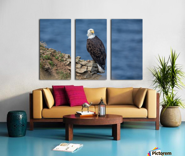 Perched and Proud Split Canvas print